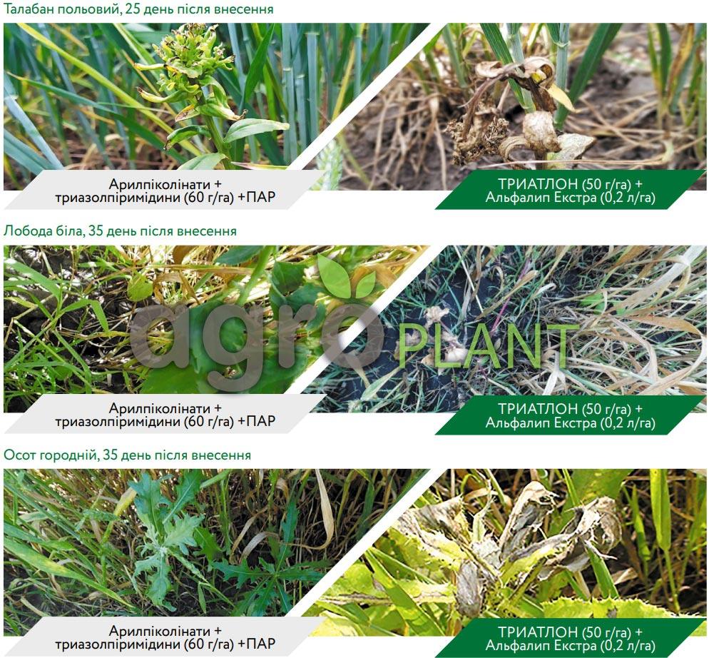 Мощноегербицидноедействие Триатлона: контроль и предотвращение отрастания сорняков