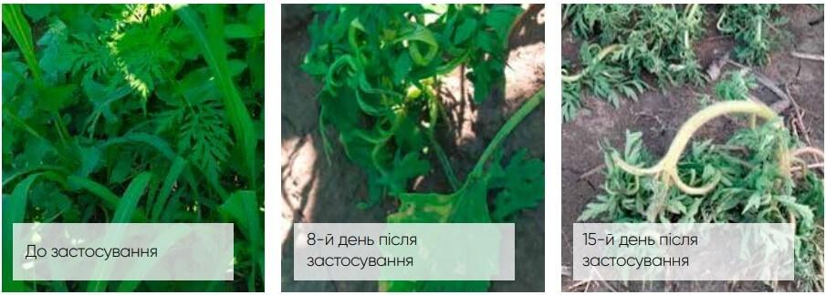 гербицид Гелиантекс контроль амброзии