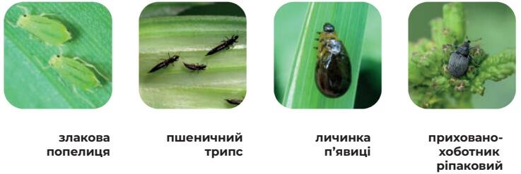 Основные виды вредителей, которые контролирует Канонир Дуо