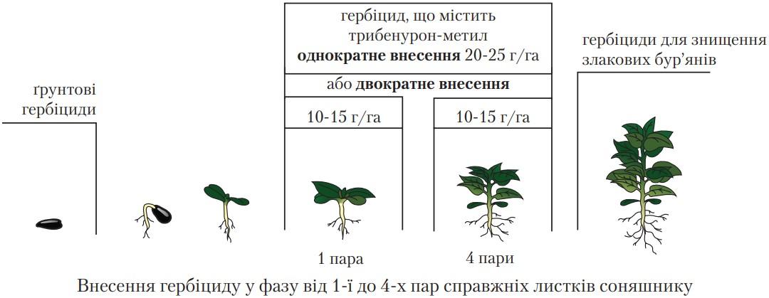 Рекомендации по применению для гибрида подсолнечника внес (25 г гербицида на 1 га)
