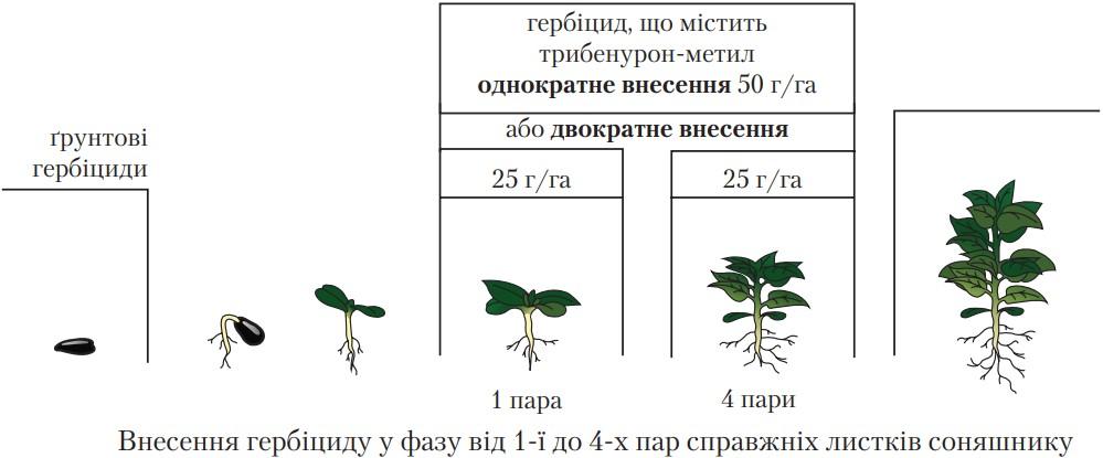 Рекомендации по применению для гибрида подсолнечника (50 г гербицида на 1 га)
