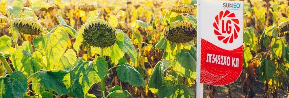 семена подсолнечника лимагрейн