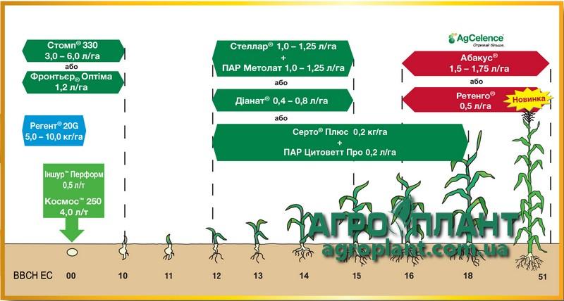 Абакус - сроки применения на кукурузе