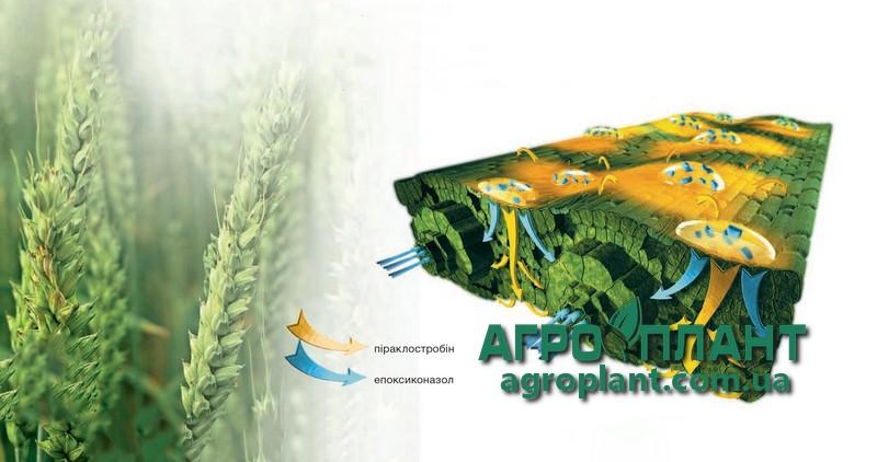 Применение гербицида Абакус на Зерновых пшеницы и ячменя
