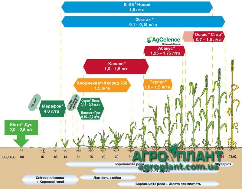 Абакус - рекомендации по применению на посевах озимой пшеницы (интенсивная технология)