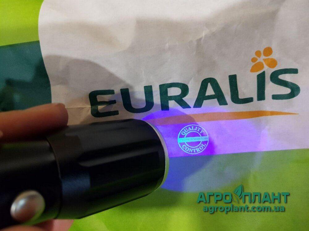 Подсолнечник Белла Евралис фото проверки качества - оригинал