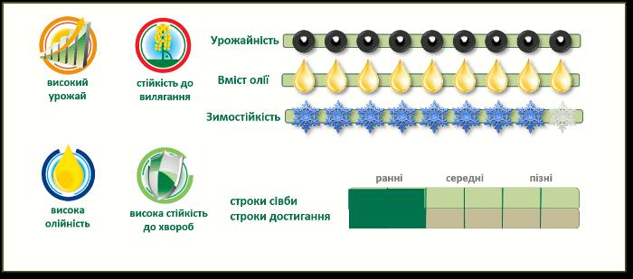 Преимущества озимого рапса ПР44Д06 (PR44D06)