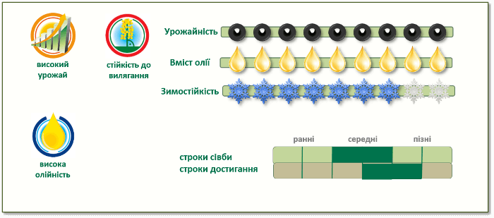 Переваги озимого ріпакуПТ248 (PT248)