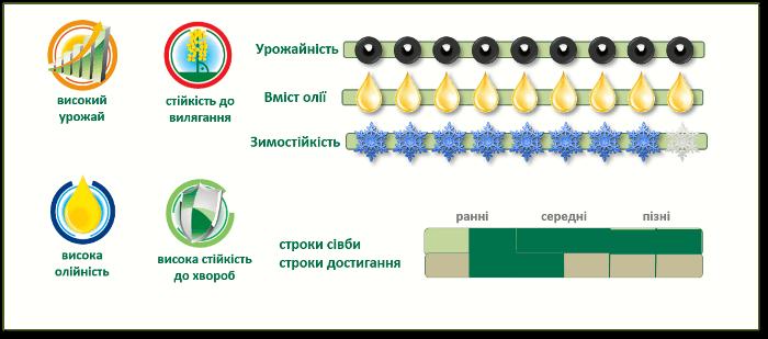 Переваги озимого ріпакуПХ113 (PX113)