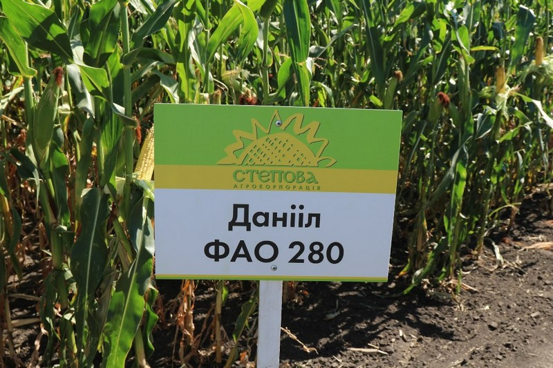 Кукуруза Даниил ФАО 280