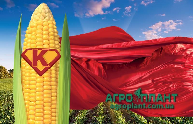 Семена гибрида кукурузы СИ Телиас(ФАО 200) – Сингента