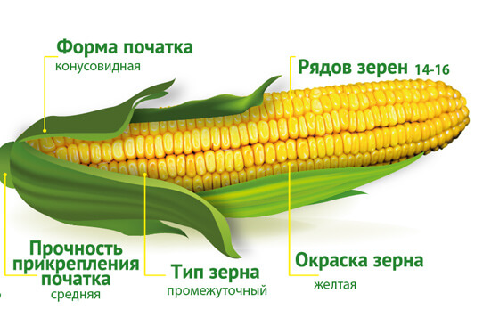Семена кукурузы Визави