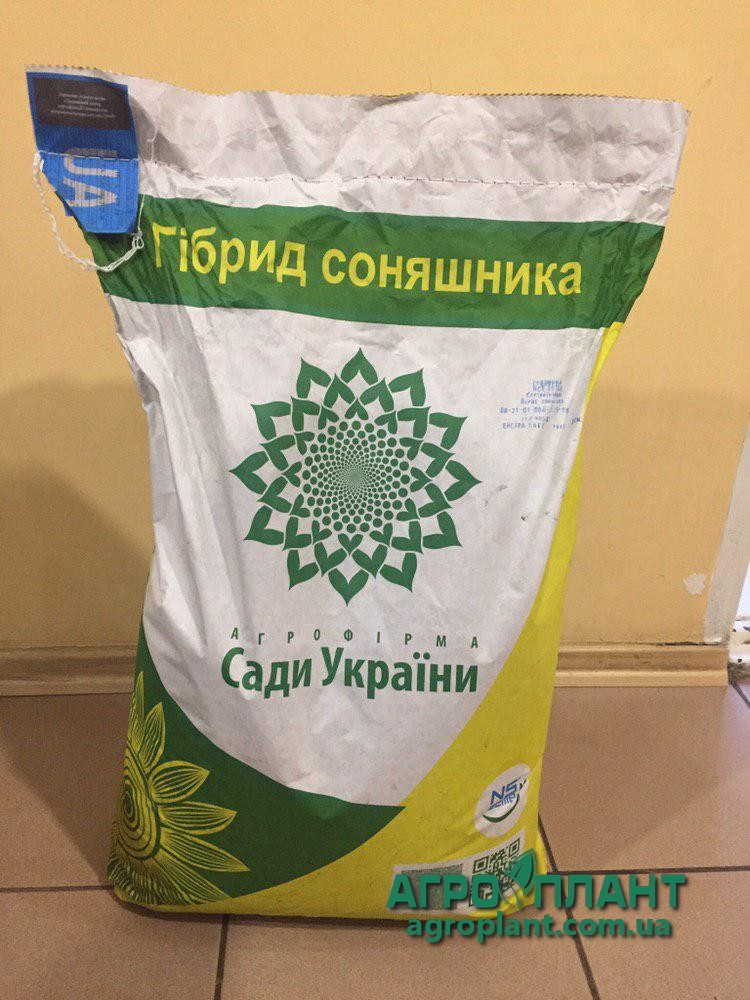 Латитуда подсолнечник Сады Украины фото спереди