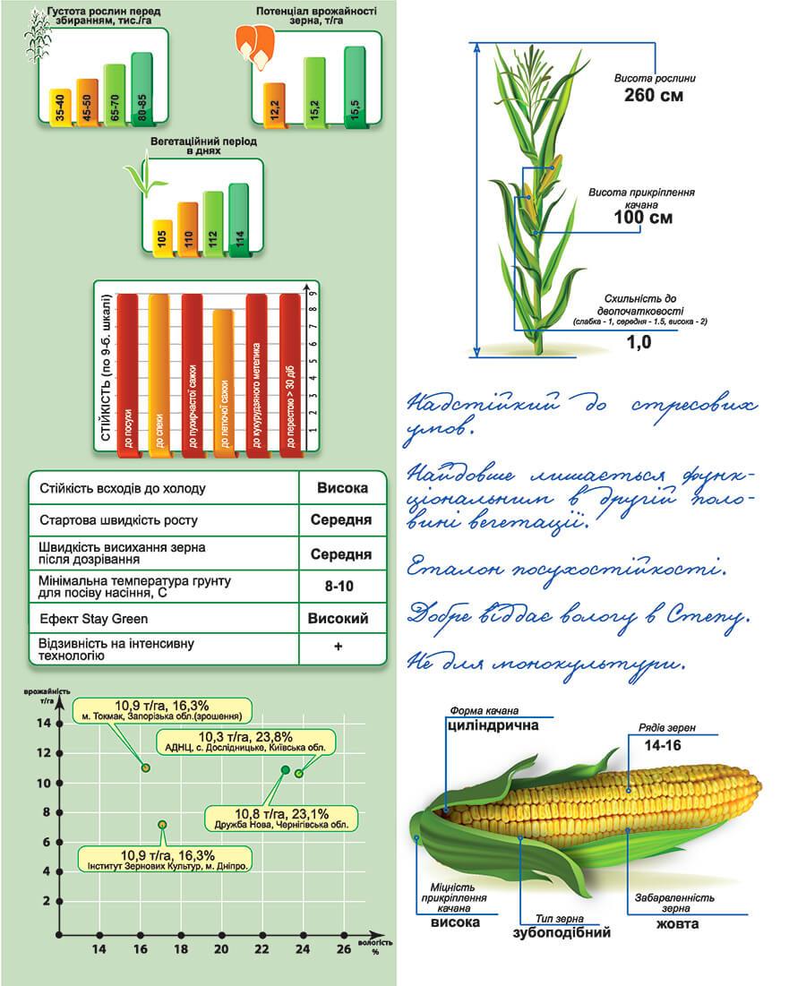 Насіння кукурудзи ДМ Вікторія