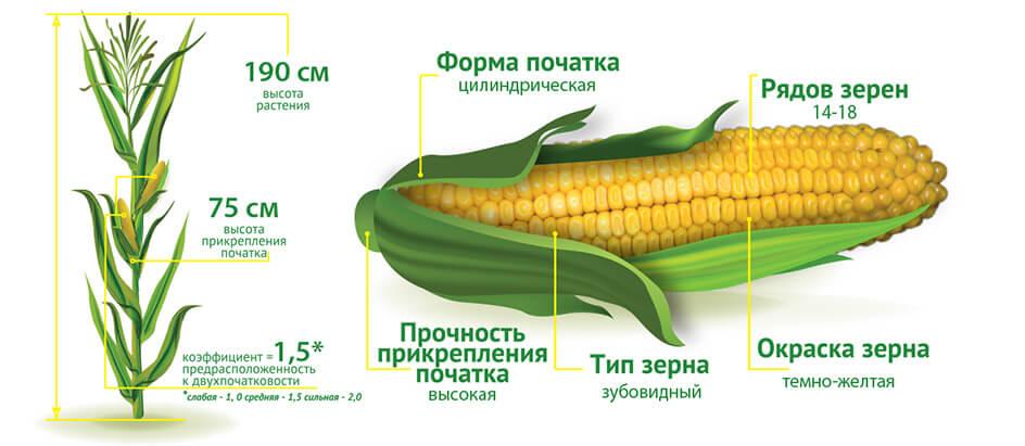 Урожайность гибрида кукурузы ДМС Тренд