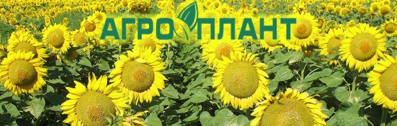 купить семена подсолнуха, гибриды подсолнечника