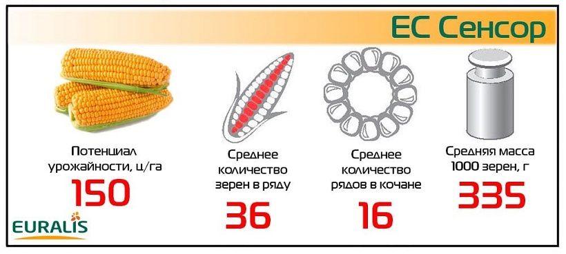 Семена Кукурузы ЕС Сенсор Евралис